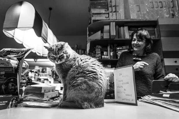 Фотографии кошек, которые живут в местах, где работают люди 16