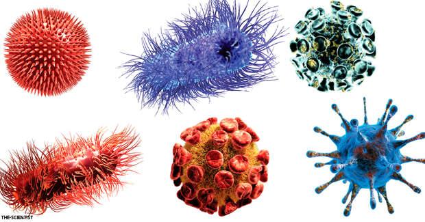 Ученые открыли новое семейство вирусов - и это многое объясняет о наших болезнях