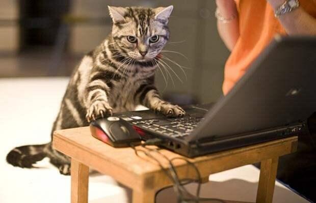 """Коты и кошки смогут переписываться, а также """"лайкать"""" фото друг друга - Технологии NewsMe"""