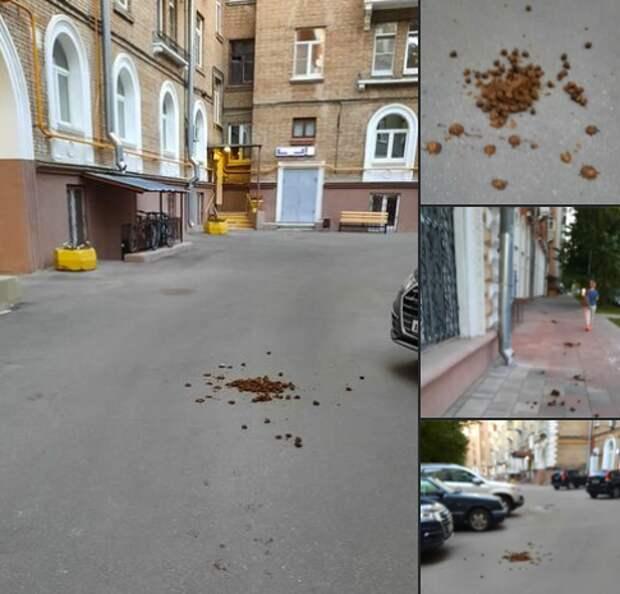 Лошадиные фекалии убрали во дворе на Новопесчаной