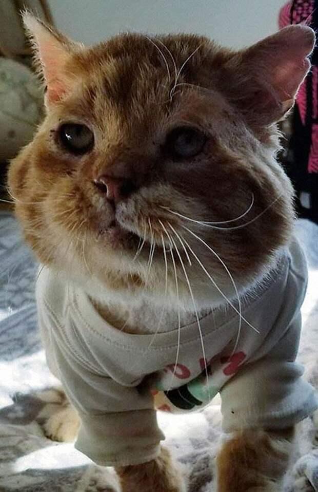 Больной и замёрзший бездомный кот постучался в окно женщины в Рождество
