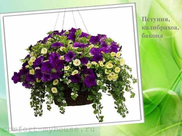 miks iz cvetov v kashpo
