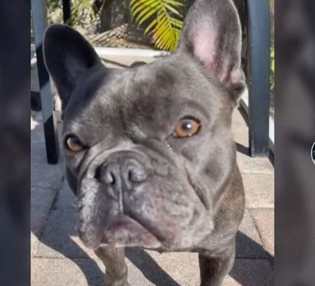 Курьез: хозяйка обнаружила у собаки «страшную болезнь» и рассмешила ветеринаров