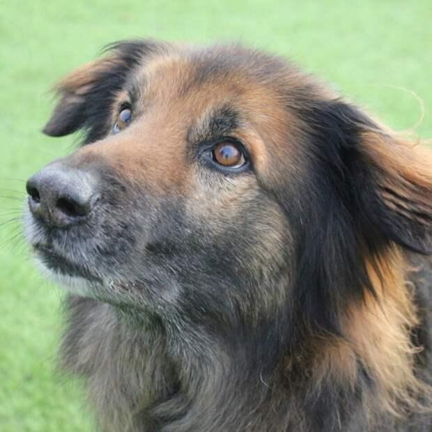 Эта собака наконец обрела дом после 10 лет проведенных в приюте
