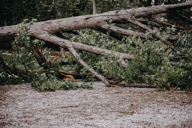 Грозы и усиление ветра ожидаются в Удмуртии во вторник