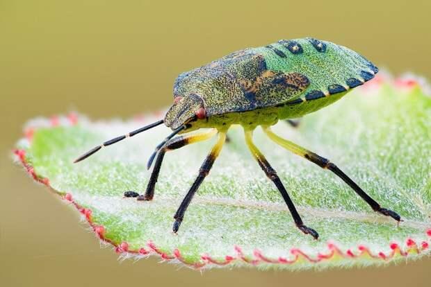 insects60 Портреты насекомых
