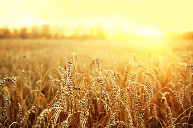 зерновой коридора»