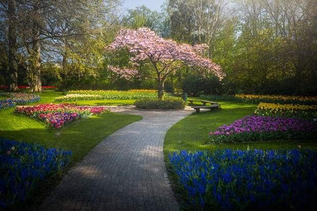 Прогулка по сказочному цветочному саду Кёкенхоф