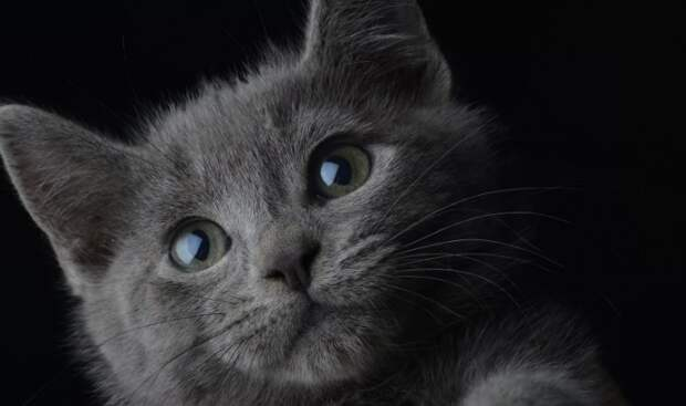 Котенка то брали домой, то дарили, то выкидывали на улицу. Он уже не надеялся на тепло и ласку от людей