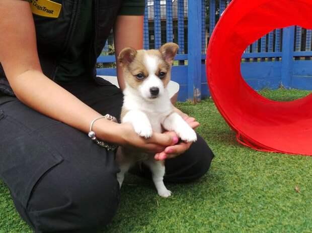 В Великобритании спасли маленького щенка, которого оставили в закрытой коробке у обочины дороги
