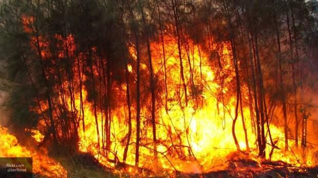 Площадь лесных пожаров в России выросла в два раза за две недели