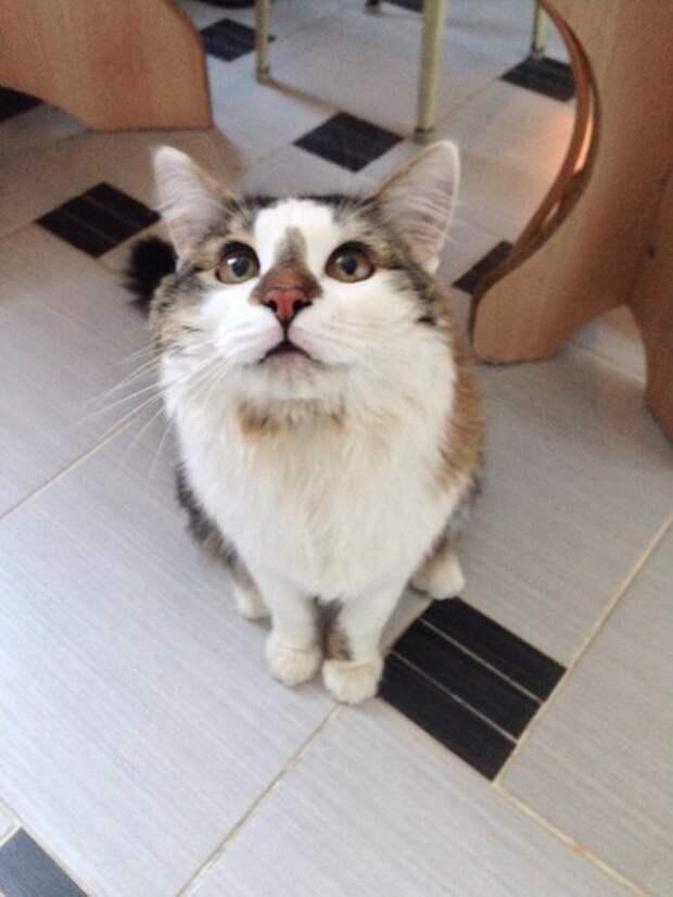 Когда одна встреча может изменить жизнь дом, кошки