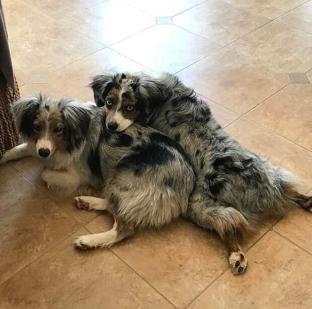 """Слепую собаку записали в """"плембрак"""" и собирались выбросить, но её спасла родная сестра"""