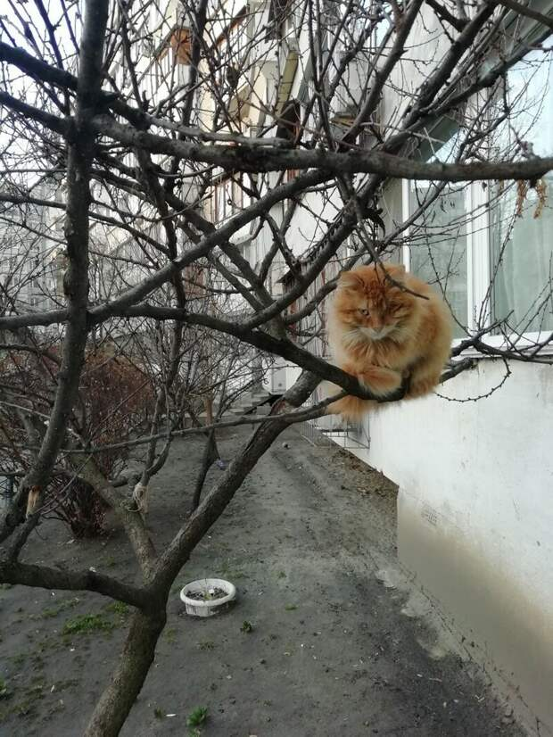 Для утреннего воскресного настроения коты, настроение, прикол