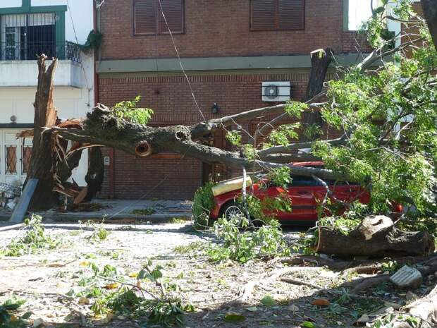 15 автомобилей и 30 деревьев пострадали в Москве из-за сильного ветра