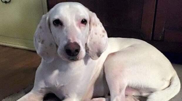 Пёс 11 раз оказывался в приюте, и волонтёры поняли, что не смогут с ним расстаться