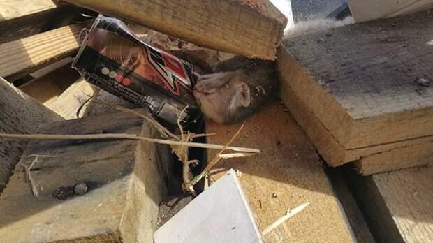 В течении семи часов парень спасал брошенных котят из мусорки