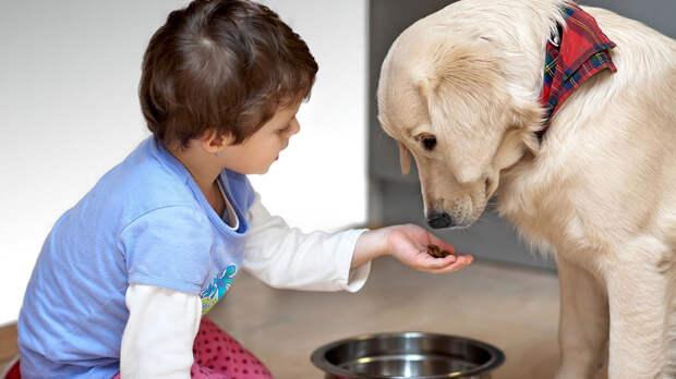 Ребенок и собака: неочевидные преимущества воспитания детей в доме с животными