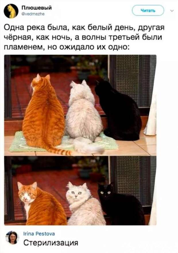 Смешные комментарии. Подборка chert-poberi-kom-chert-poberi-kom-57570217102020-12 картинка chert-poberi-kom-57570217102020-12