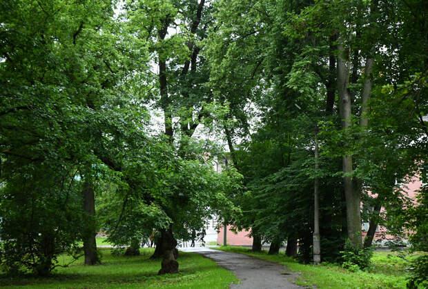 Парк «Воксал» в Твери облагородят до сентября этого года