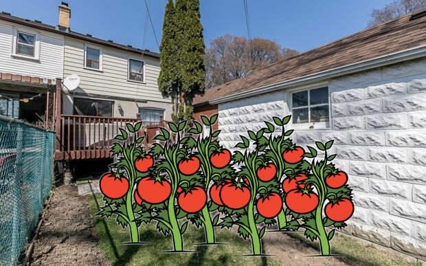 Ах как бы хотелось вот на этом пустом месте посадить помидоры. Но нельзя :(   Коллаж автора.