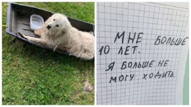 Собаку бросили привязав к саням и оставив записку