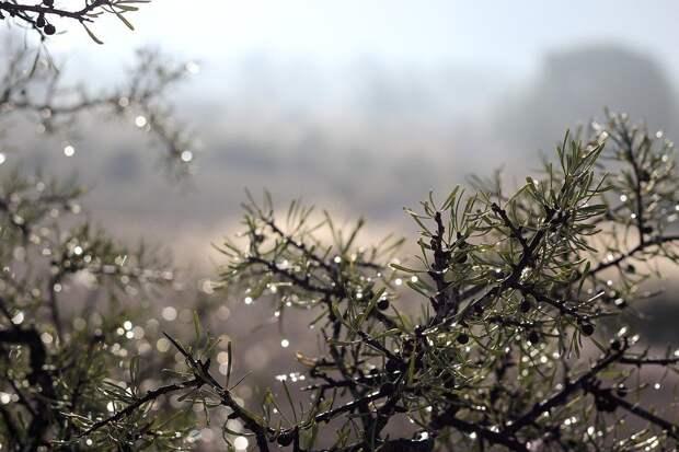 Погода в Удмуртии: в понедельник ожидаются дожди и туман