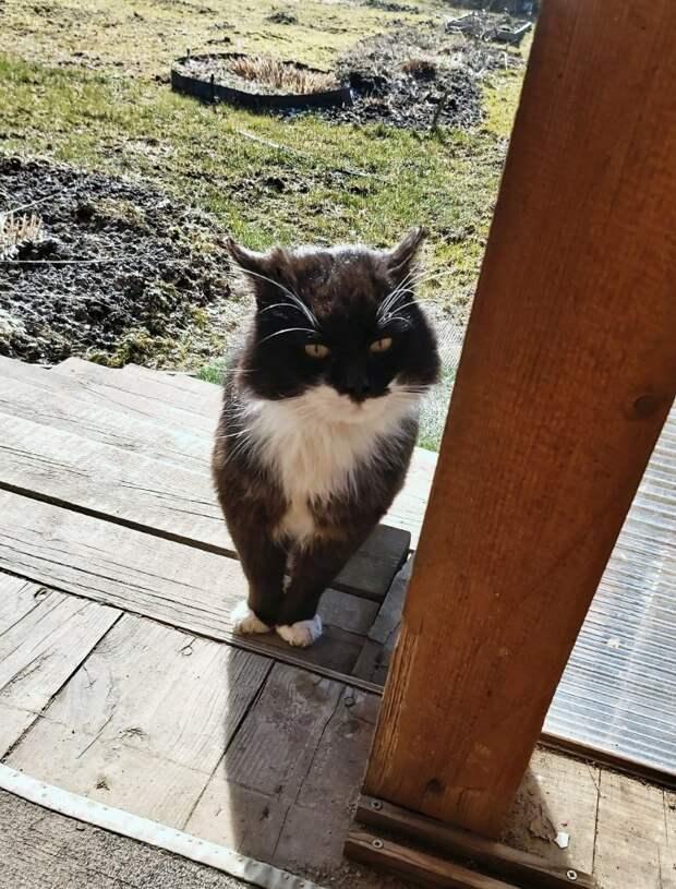 Помогите!!! Пропадает ручной и ласковый пушистый котик, настоящий красавец.