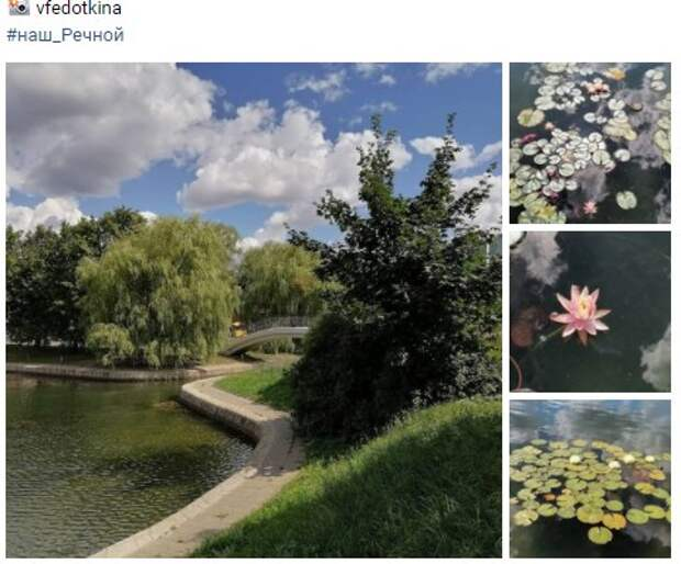 Фото дня: пруд в парке Дружбы зацвел