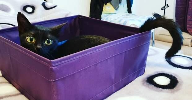 Маленький котёнок показал своё огромное желание жить, а добрые люди помогли победить все болезни домашний питомец, животные, забота, кошка, спасение