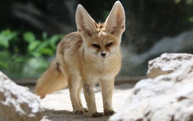 15 самых красивых животных в мире