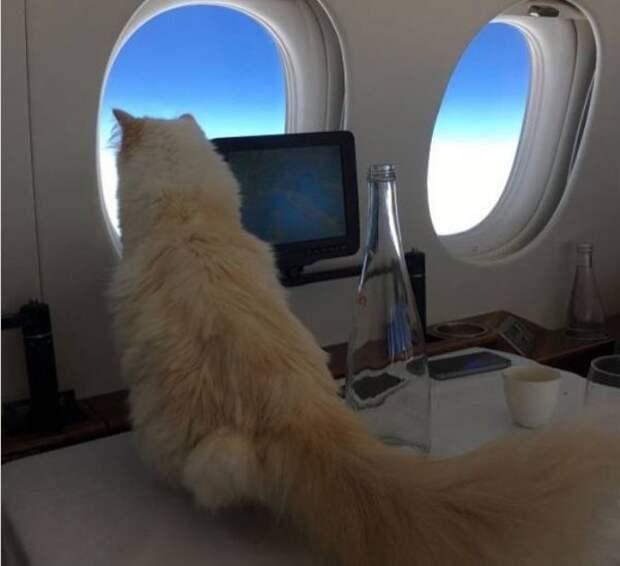 Самая богатая кошка мира: красотка Шупетт, которой Карл Лагерфельд завещал 200 миллионов долларов