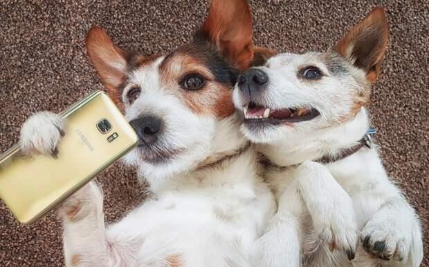 15 забавных историй о собаках, которые вызвали смех и недоумение своих владельцев