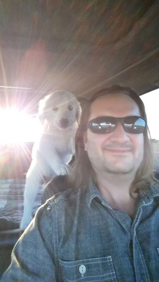 27 фото людей, которые наконец-то осуществили свою мечту и приютили собаку