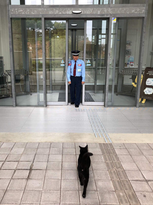 cats-sneaking-security-ken-chan-gosaku-hiroshima-onomichi-city-museum-of-art-5bee84780e708__700