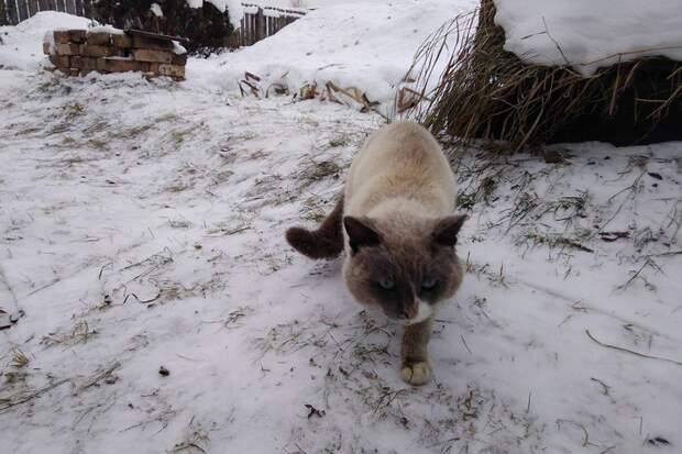 Пропавший кот вернулся домой, спустя два года