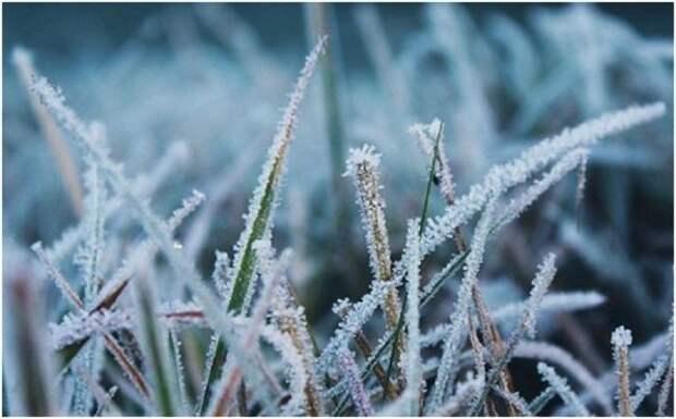 Горловчан предупреждают о возможных заморозках