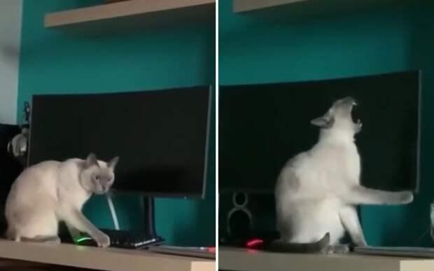 Навел суету: кот устроил хаос на столе хозяина и заставил соцсети хохотать