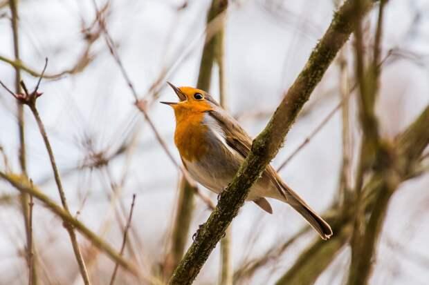 Систему оповещения в Ижевске проверили пением птиц