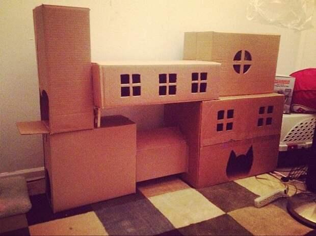 Необычные кошачьи домики (трафик)