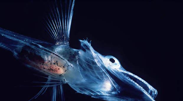 Прозрачны до дрожи: 11 почти невидимых созданий