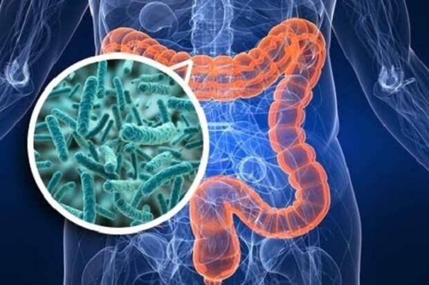 10 способов восстановить микрофлору кишечника без лекарств