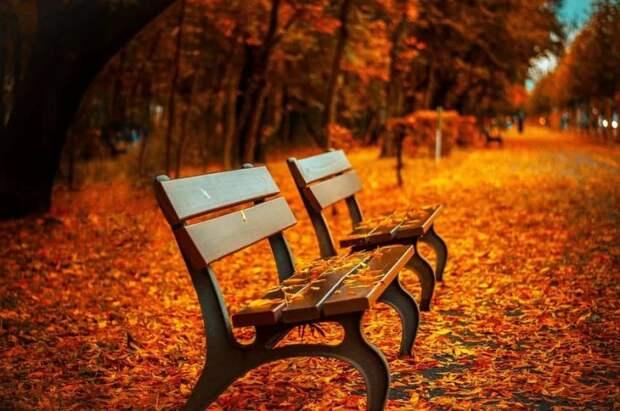 В парке «Вагоноремонт» до понедельника отремонтируют скамейку
