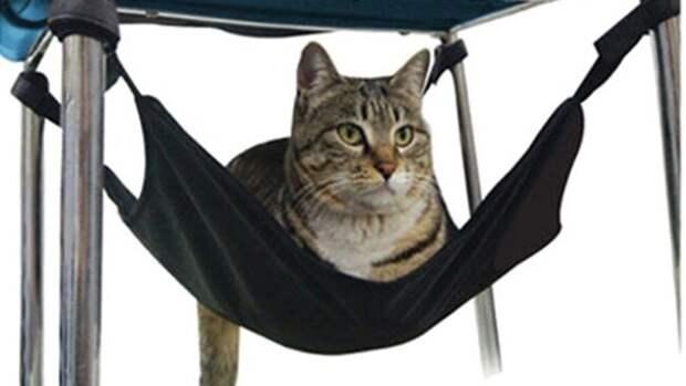 9 советов по дешевым аксессуарам для кошек