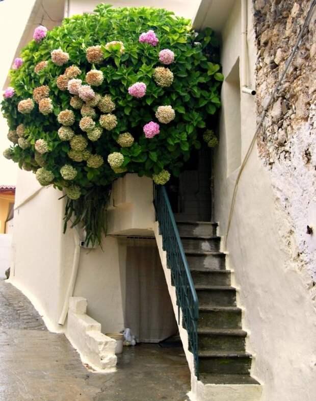 Некрасивый балкон можно прикрыть необыкновенной и пышной растительностью.