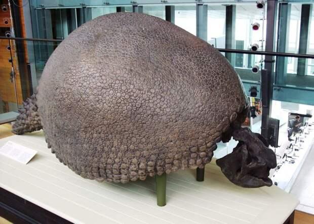 доисторический броненосец