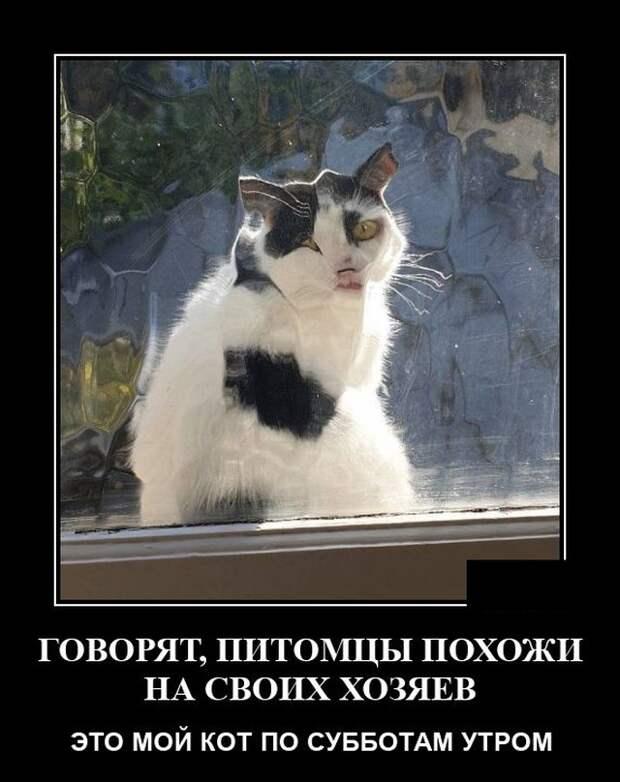 Демотиватор про кота за окном