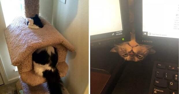 20 фото котов, которые творят глупые и смешные вещи