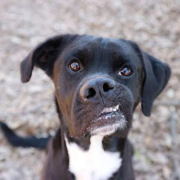 Люди сторонились пса со странной внешностью, но он просто нуждался в любви история, история спасения, особенные животные, приют, собака, собаки