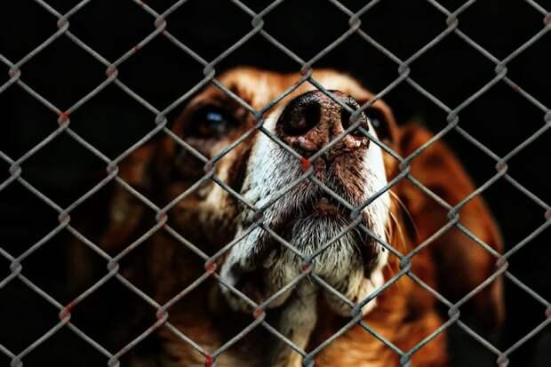 Экоцентр на Ленинградке организовал сбор кормов животным из приюта